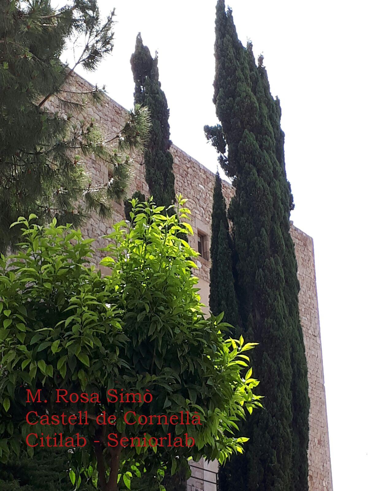 M. Rosa Simo